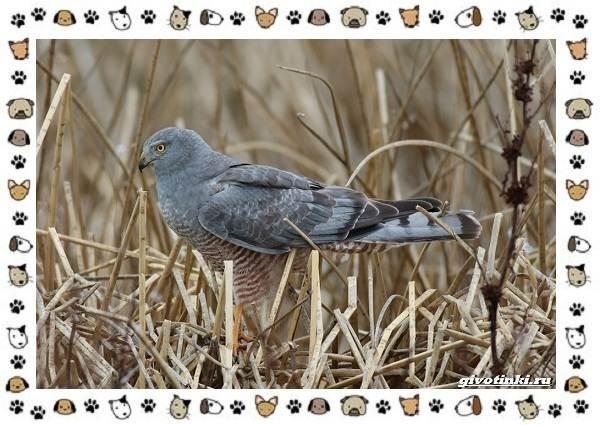Виды-орлов-Описание-особенности-и-ареал-обитания-40