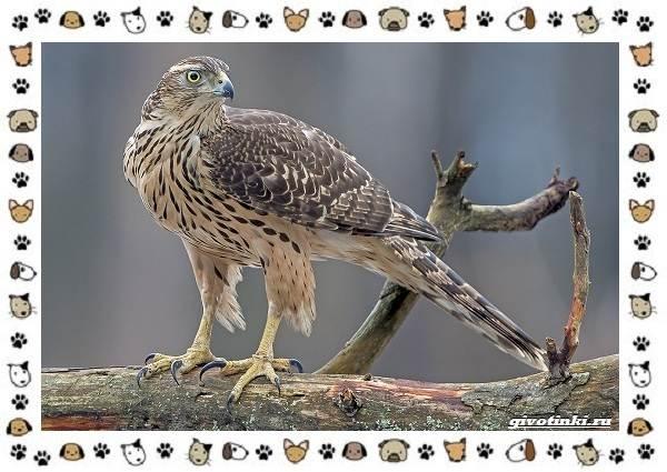 Виды-орлов-Описание-особенности-и-ареал-обитания-42