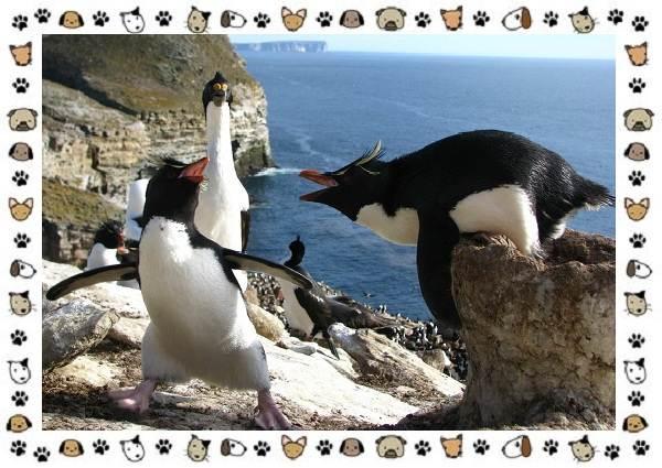 Виды-пингвинов-особенности-места-обитания-взаимоотношения-с-человеком-14