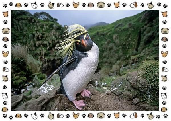 Виды-пингвинов-особенности-места-обитания-взаимоотношения-с-человеком-17