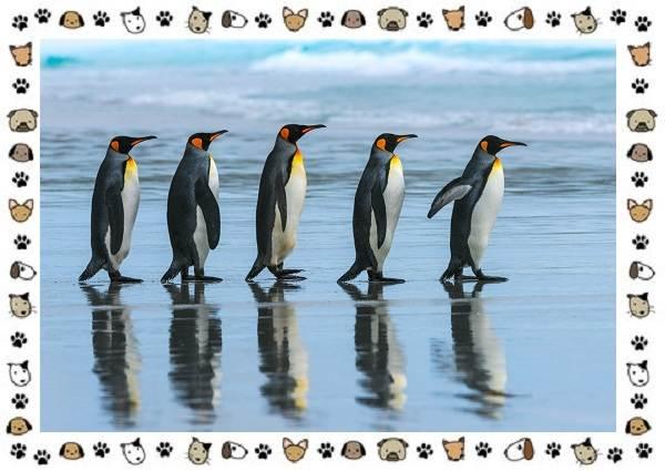 Виды-пингвинов-особенности-места-обитания-взаимоотношения-с-человеком-21