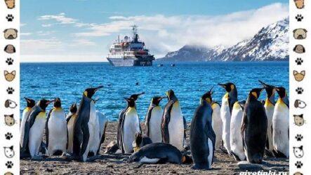 Виды пингвинов: особенности, места обитания, взаимоотношения с человеком