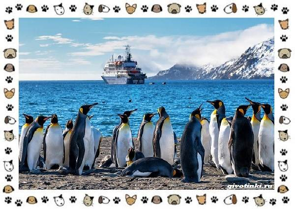Виды-пингвинов-особенности-места-обитания-взаимоотношения-с-человеком