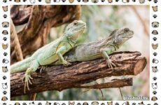 Виды ящериц: многообразие в природе, поведение, особенности