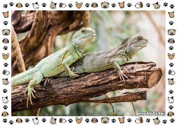 Виды-ящериц-многообразие-в-природе-поведение-особенности-1