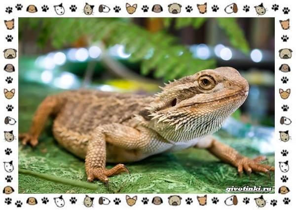 Виды-ящериц-многообразие-в-природе-поведение-особенности-11