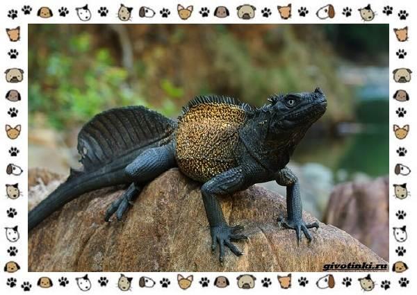 Виды-ящериц-многообразие-в-природе-поведение-особенности-13