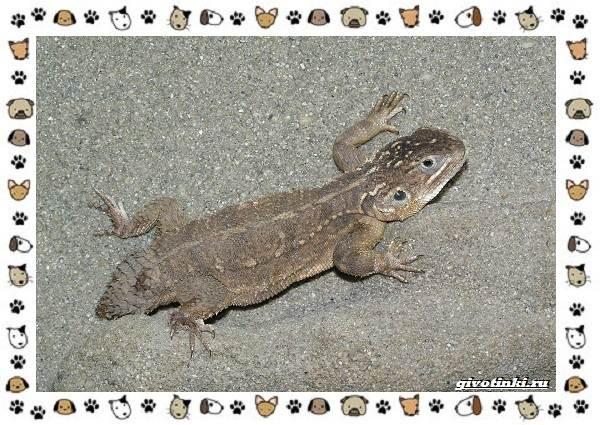 Виды-ящериц-многообразие-в-природе-поведение-особенности-15