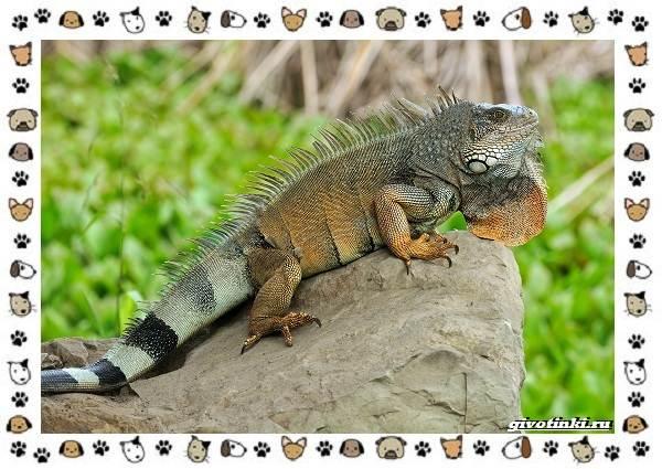 Виды-ящериц-многообразие-в-природе-поведение-особенности-16