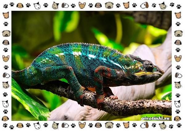 Виды-ящериц-многообразие-в-природе-поведение-особенности-17