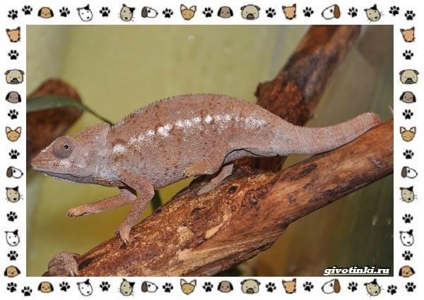 Виды-ящериц-многообразие-в-природе-поведение-особенности-18