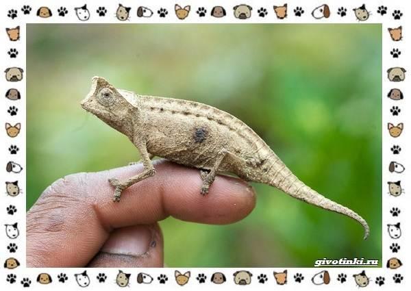 Виды-ящериц-многообразие-в-природе-поведение-особенности-19