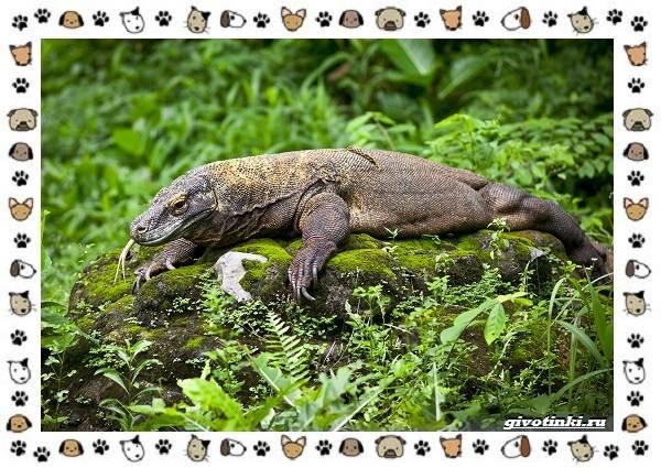 Виды-ящериц-многообразие-в-природе-поведение-особенности-20