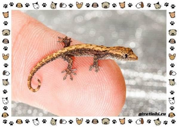 Виды-ящериц-многообразие-в-природе-поведение-особенности-21