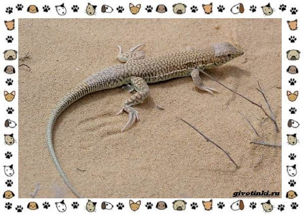 Виды-ящериц-многообразие-в-природе-поведение-особенности-3