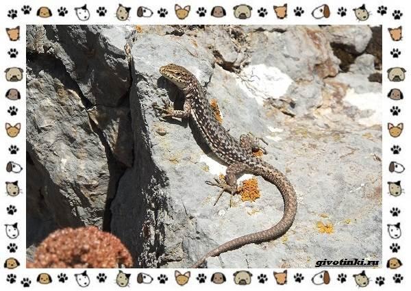 Виды-ящериц-многообразие-в-природе-поведение-особенности-4