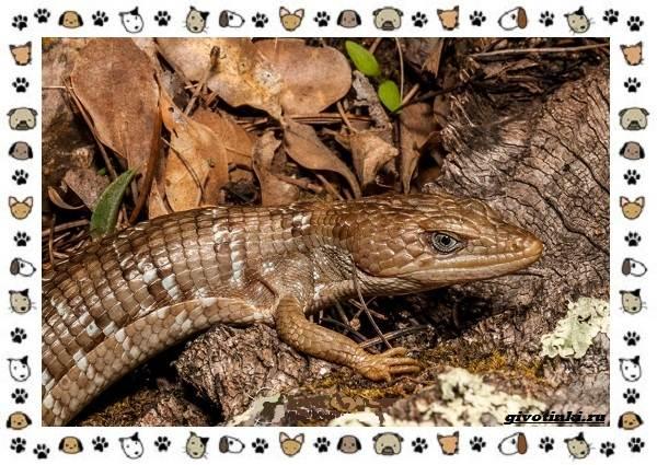 Виды-ящериц-многообразие-в-природе-поведение-особенности-5
