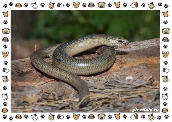 Виды-ящериц-многообразие-в-природе-поведение-особенности-6