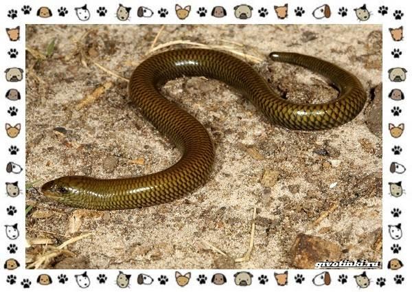 Виды-ящериц-многообразие-в-природе-поведение-особенности-7