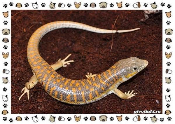 Виды-ящериц-многообразие-в-природе-поведение-особенности-8