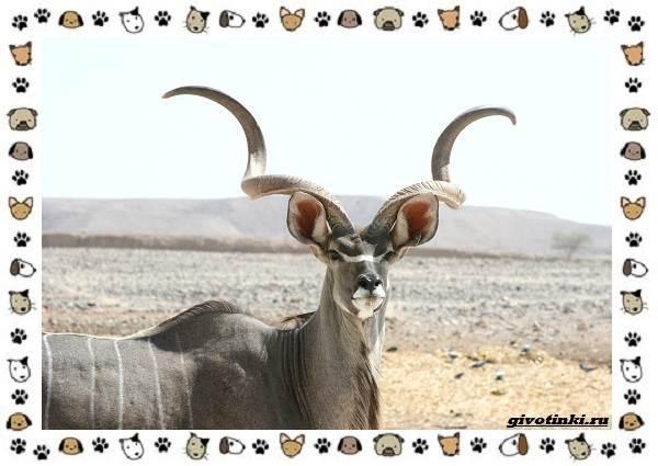 Виды-антилоп-описание-классификация-место-в-экосистеме-15