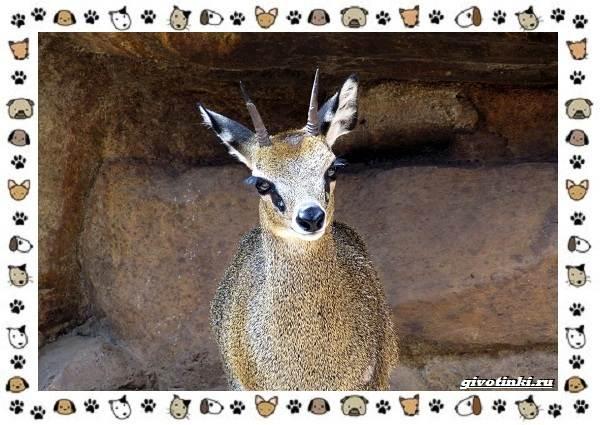 Виды-антилоп-описание-классификация-место-в-экосистеме-22