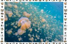 Виды медуз: описания, названия, образ жизни и среда обитания