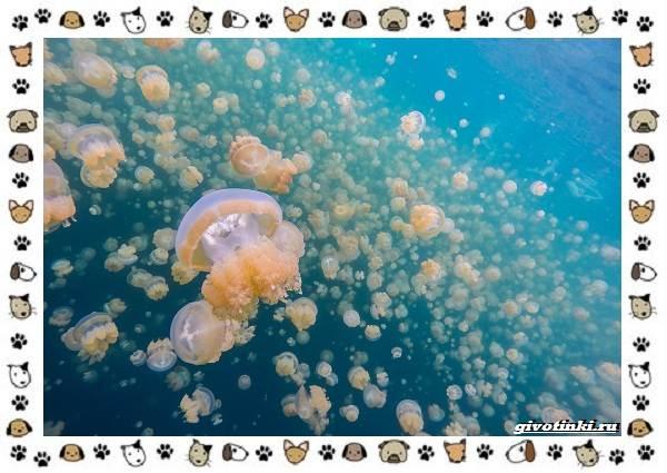 Виды-медуз-описания-названия-образ-жизни-и-среда-обитания-1
