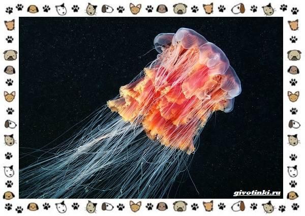 Виды-медуз-описания-названия-образ-жизни-и-среда-обитания-18
