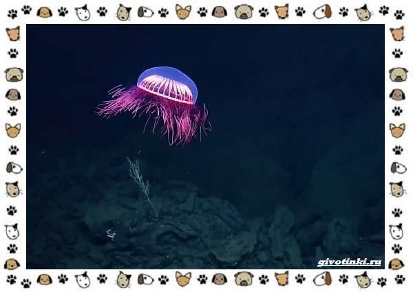 Виды-медуз-описания-названия-образ-жизни-и-среда-обитания-2