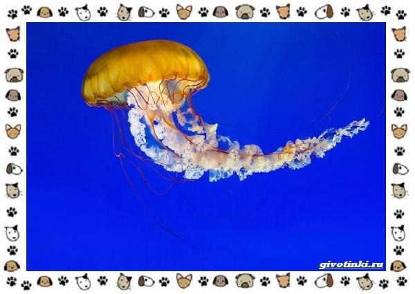 Виды-медуз-описания-названия-образ-жизни-и-среда-обитания-23