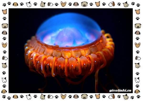 Виды-медуз-описания-названия-образ-жизни-и-среда-обитания-3