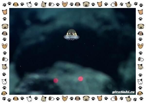 Виды-медуз-описания-названия-образ-жизни-и-среда-обитания-9