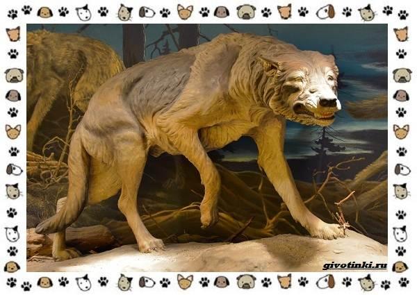 Виды-волков-от-древних-до-современных-2