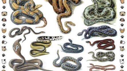 Виды змей: описание, классификация, место в экосистеме