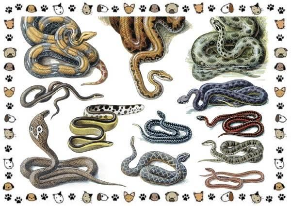 Виды-змей-описание-классификация-место-в-экосистеме-1