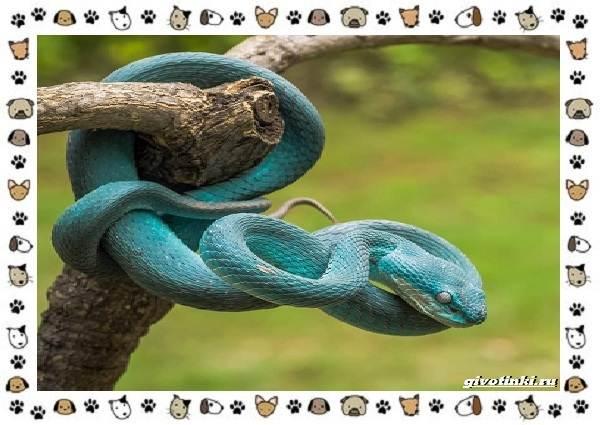 Виды-змей-описание-классификация-место-в-экосистеме-10