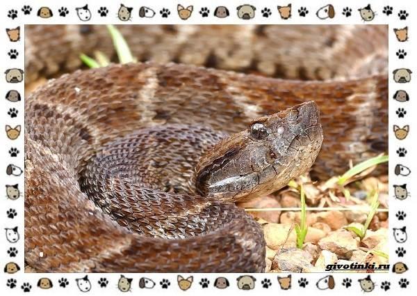 Виды-змей-описание-классификация-место-в-экосистеме-11