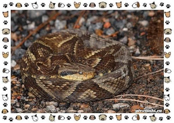 Виды-змей-описание-классификация-место-в-экосистеме-12