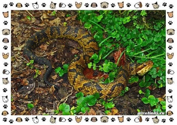 Виды-змей-описание-классификация-место-в-экосистеме-14