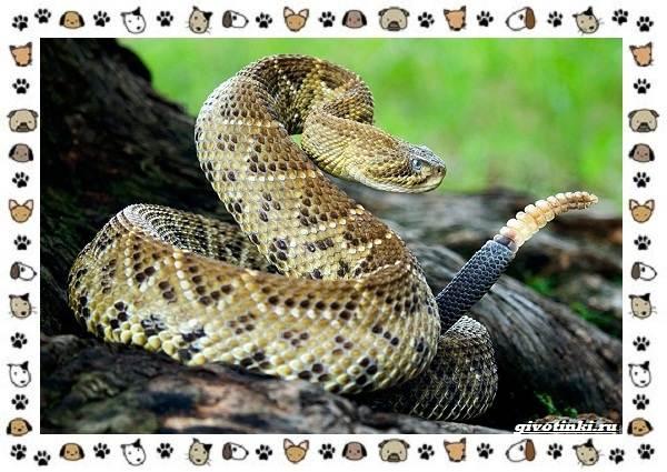 Виды-змей-описание-классификация-место-в-экосистеме-15