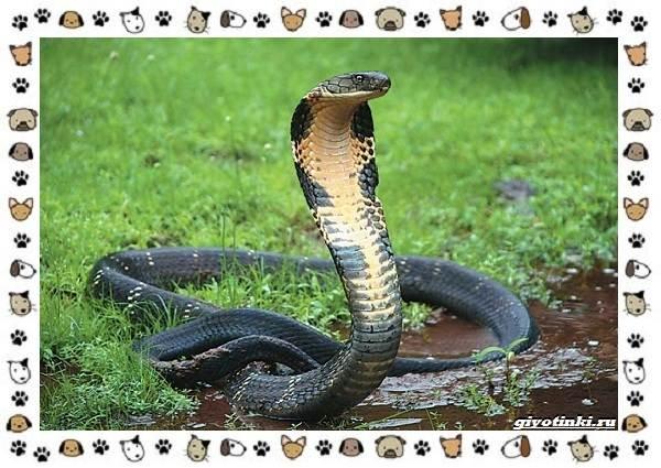 Виды-змей-описание-классификация-место-в-экосистеме-16