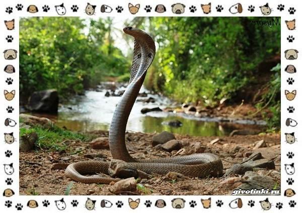 Виды-змей-описание-классификация-место-в-экосистеме-18
