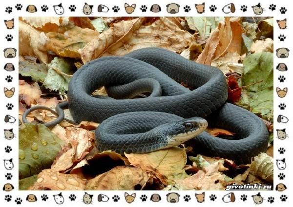 Виды-змей-описание-классификация-место-в-экосистеме-19