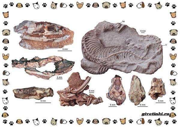 Виды-змей-описание-классификация-место-в-экосистеме-2