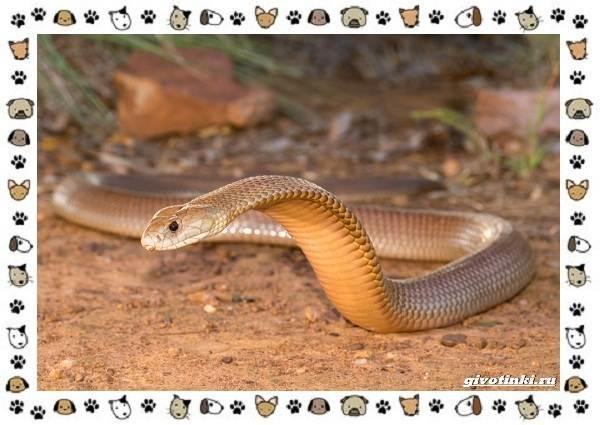 Виды-змей-описание-классификация-место-в-экосистеме-20