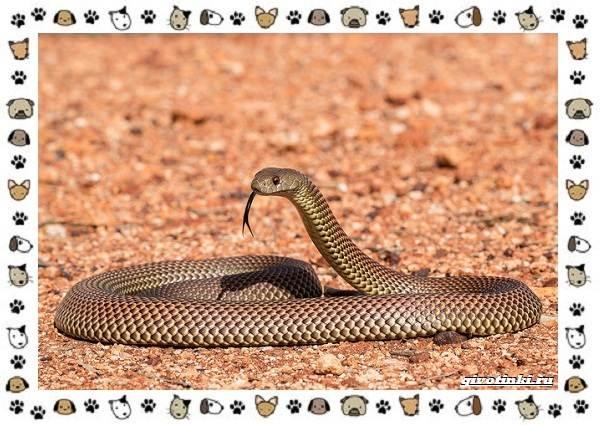 Виды-змей-описание-классификация-место-в-экосистеме-21