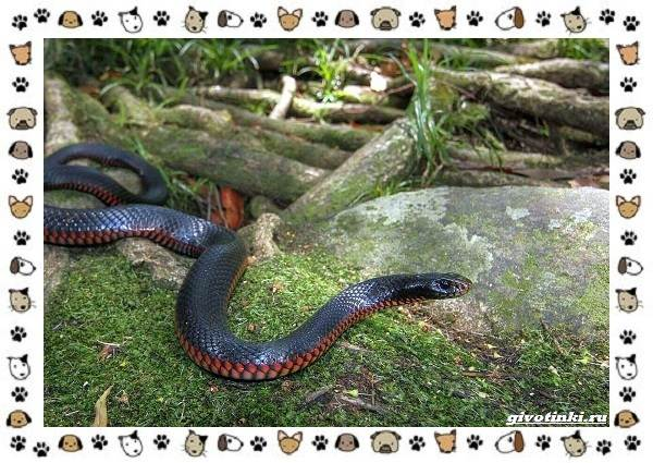 Виды-змей-описание-классификация-место-в-экосистеме-22