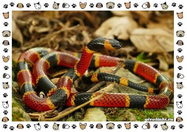 Виды-змей-описание-классификация-место-в-экосистеме-24