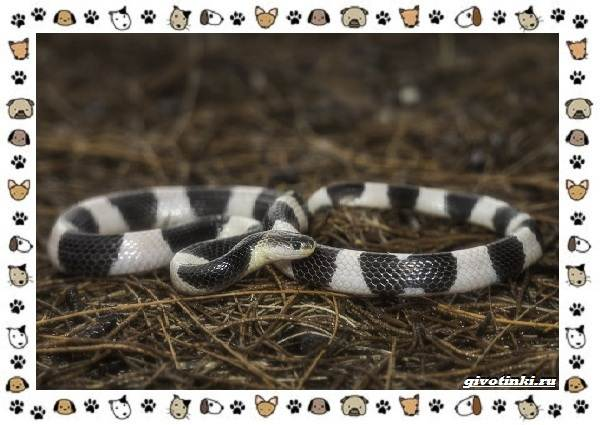 Виды-змей-описание-классификация-место-в-экосистеме-25